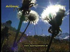 """""""Alpenspektakel""""Alpen Echo"""