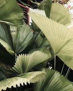 #jimsandkittys #tropical #islandlife
