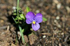 Plants, Flowers, Flora, Plant