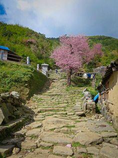 Ghorepani Poon Hill Trek #Nepal #Asia #Travel