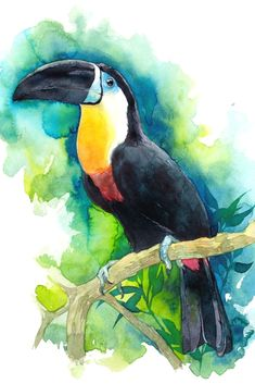 Are You Presently Finding Watercolor Arts Inspirations ? Come Visit Our Web Site And Then See Our Personal Watercolor Art Album. Watercolor Artwork, Watercolor Bird, Watercolor Animals, Watercolor Illustration, Watercolor Artists, Bird Drawings, Animal Drawings, Art Du Croquis, Inspiration Art