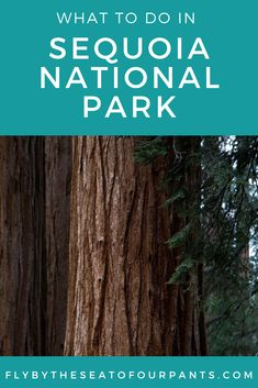 If you are visiting the Fresno, California area you must check out Sequoia National Park! If you are wondering what to do there, read all of my must-see sights which include magnificent views and big, beautiful trees in this giant forest. Fresno California, Vacation Destinations, Day Trip, Family Travel, Travel Tips, National Parks, Adventure, Check, Trees