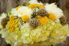 Google Image Result for http://thefrenchbouquettulsa.com/blog/wp-content/uploads/2011/08/Yellow-Bridal-Bouquet-of-Hydrangea-Peonies-Billy-Balls-Yarrow-and-Scabiosa-by-The-French-Bouquet-Artworks-Tulsa-Photography.jpg