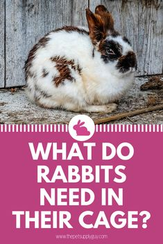 Getting a cage for your rabbit is only the first step towards properly caring for your rabbit.  Rabbits need a wide range of supplies and accessories in order to live a happy and healthy life.  To learn more read our article to find out what a rabbit will need in their cage.