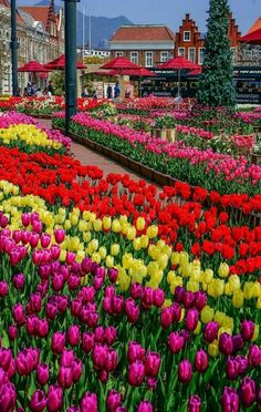 Pin By Ivanka Kostova On Vsichko Flowers Tulips Garden