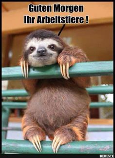 Guten Morgen Ihr Arbeitstiere! | Lustige Bilder, Sprüche, Witze, echt lustig