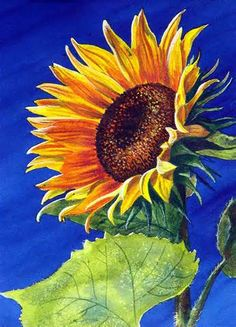 sunflower watercolor - Yahoo! Image Search Results