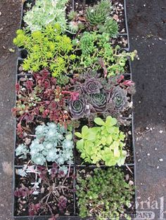 vertical plant wall, something to try with succulents this spring