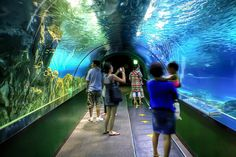 COEX Mall,South Korea's lagest underground mall. Aquarium, casino & high-end shopping.