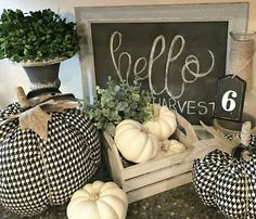 The cutest pumpkins I have EVER seen with my balls!! New favorite love, houndstooth pumpkins