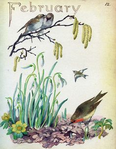 White robins - Morning Earth Artist/Naturalist Edith Holden