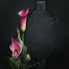 Moonbeam's Lovely Lilies (FS/CU) [Moonbeam's Lovely Lilies] : Scrap and Tubes Store, Digital Scrapbooking Supplies Flower Frame, Flower Art, Calla Lily Tattoos, I Love You Drawings, Frame Clipart, Borders And Frames, Calla Lilies, Decoupage Paper, Love Images