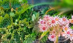 The Best Gardening Daily Deals in El Paso - http://elpaso.miideals.com/blog/the-best-gardening-daily-deals-in-el-paso/