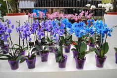 """Как пересадить орхидею """"Фаленопсис"""" - пошаговая инструкция » Женский Мир"""