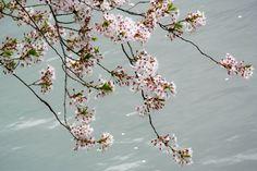 Tokyo Spring 4