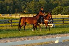 "Last week the Paulick Report introduced a bay Thoroughbred gelding named ""Trajan,"" observing the process as the 4-year-old began his transition from a racing career to that of a lead pony. Trey immediately proved his disposition and sensibility make him an ideal candidate for the job, and the kind-eyed youngster picked up on his early …"