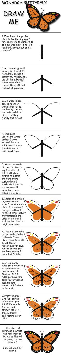 Monarch Butterfly draw and learn