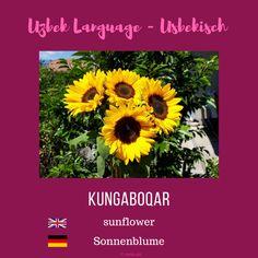 "Uzbek ""sunflower""; Usbekisch ""Sonnenblume"" #usbekisch #uzbeklanguage Uzbek Language, Sunflowers"