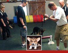Dog Behavior Cues Dogtraining And Clickertraining Good Dog