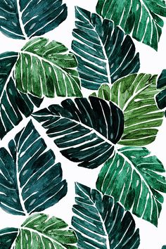 Monstera Leaves by crystal_walen - hand painted Monstera leaves on fabric, wallpaper, and gift wrap.  Emerald green plant leaves in a watercolor painterly style.
