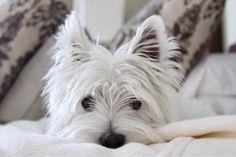 The White Dog Blog: Flashback Friday