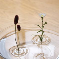 """""""Floating Vase / RIPPLE"""" is their first commercial product. Shaped like ripples in water, """"floating ripple vase"""" floats on water. All you have to do is fill a container with water, and place a single. Floating Flowers, Floating In Water, Resin Sculpture, Resin Art, Ikebana, Flower Vases, Flower Arrangements, Flower Centerpieces, Table Centerpieces"""