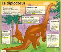 http://www.lepetitquotidien.fr/media/infography/mag/lpq-35/lpq35-le-diplodocus.jpg