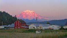 Last light on Mt. Rainier, seen from Orting, WA  Oh wait, I live here!! I LOVE Mt Rainier.