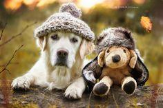 Fotografie - Gabi Stickler Dl Golden Retriever Mali & Teddy
