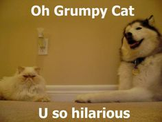 @Christina Taylor  i think you're the grumpy cat and i'm the husky.