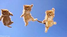 Flying Kittys