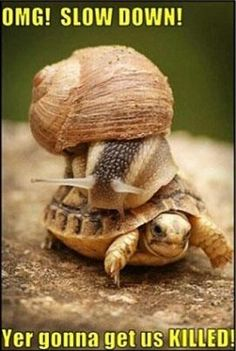 Turbo speed!
