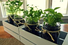 Mason Jar Indoor Herb Garden | Chives, Thyme, Rosemary... | Put it in a Jar