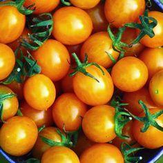 Organic Blondkopfchen Tomato
