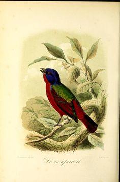 1 - Onze vogels in huis en tuin / - Biodiversity Heritage Library