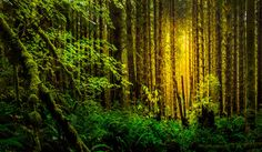 Hoh Rainforest - Olympic National Forest !!!