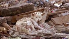 Rescate A Un Perro Que Vivia En El Basurero