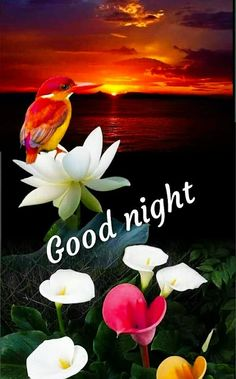 New Good Night Images For Whatsapp Good Night Thoughts, Good Night Love Quotes, Good Night Prayer, Good Night Friends, Good Night Blessings, Good Night Messages, Good Night Wishes, Good Night Everyone, New Good Night Images