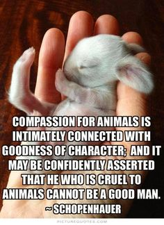 Compassion for animals is intimately associated with goodness of character, and it may be confidently asserted that he who is cruel to animals cannot be a good man. PictureQuotes.com