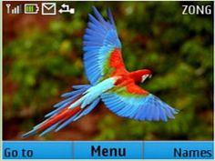 Parrot theme for Nokia C3-00 & X2-01