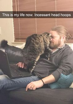 Astounding >> Funny Cat Photos Free Download #repin