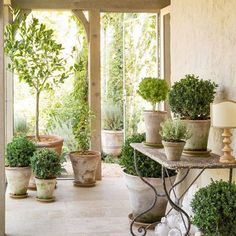 Patina Farm via The Creeping Fig- Perfect example of what you can do with plants in a room- The boxwoods are the stars in Campo de' Fiori pots