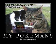 Funny Cat Pictures with Words | images-funny-cats-pictures-2.jpg#Funny%20Cats%20on%20computers ...
