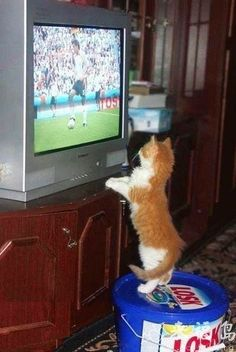 Que tal um joguinho para emocionar, hein? #Hao123Fofurinhas #Cat #Curiosity