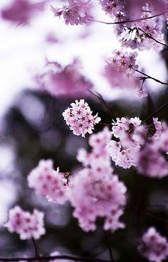Little Purple Flowers - So Dainty ! Beautiful Flowers - www.a-women.com    Flowers Flowers  Flowers