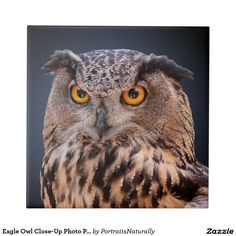 Eagle Owl Close-Up Photo Portrait Small Square Tile - This unique ceramic tile features a face-on close-up head shot photograph of a mottled brown eagle owl showing its distinctive orange eyes. This bird of prey is presented against a gradient blue to black background. http://www.zazzle.com/eagle_owl_close_up_photo_portrait_small_square_tile-227022417532024504?design.areas=%5Bsquare_small%5D&rf=238083504576446517&tc=pint