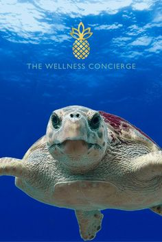 We just couldn't resist this Loggerhead Turtle's little face. So cute!