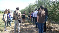 Vista a la almazara Casas de Hualdo. Periodismo Gastronómico y Nutricional UCM @UCMgastro. Imágenes Nuria Blanco, @nuriblan. (10.05.2014).