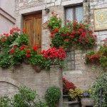 #Organica1959 #giardinaggio 12 ortaggi da fare crescere velocemente nel vostro giardino o terrazzo
