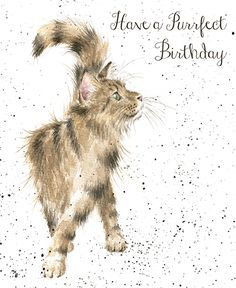 Cat Birthday Card - Wrendale Designs